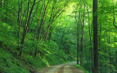 Un Plan de relance pour une forêt plus verte !